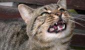 """Motanul meu devine foarte agresiv cand mergem la veterinar! Ce sa-i fac?"""