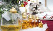 Inca o pisica ne arata cine e SEFU'! Felina mananca doar delicatese si poarta cele mai fine parfumuri