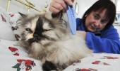 pisica rasfatata 3
