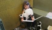pisici adapost 1