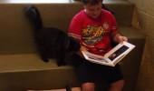 pisici adapost 3