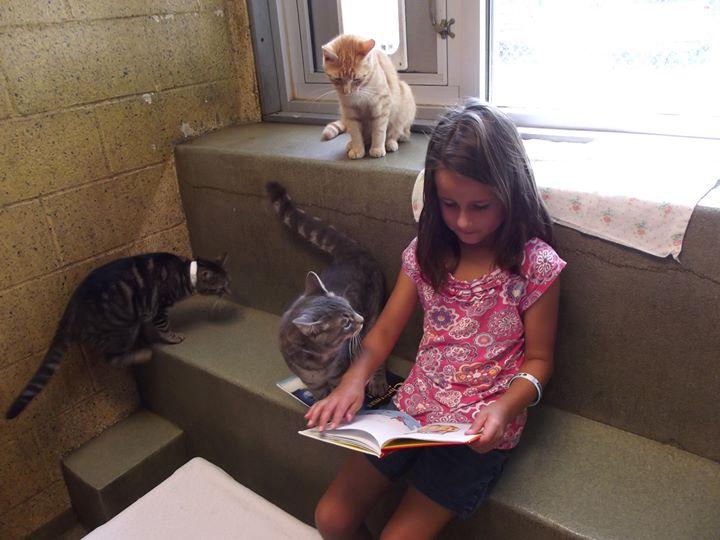 pisici adapost 4
