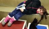 pisici adapost 5