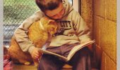 Impresionant! Copiii vin la adăpost să le citească pisicilor poveşti!