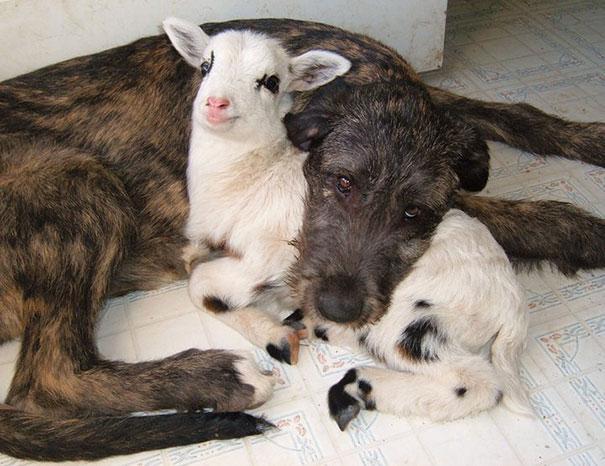 prietenii intre animale 13