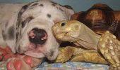 prietenii intre animale 16
