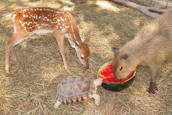 prietenii intre animale 3