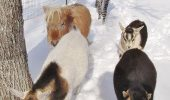prietenii intre animale 4