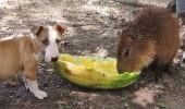 prietenii intre animale 5