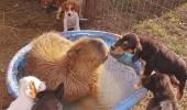 prietenii intre animale 6