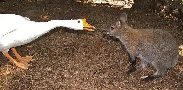 prietenii intre animale 9