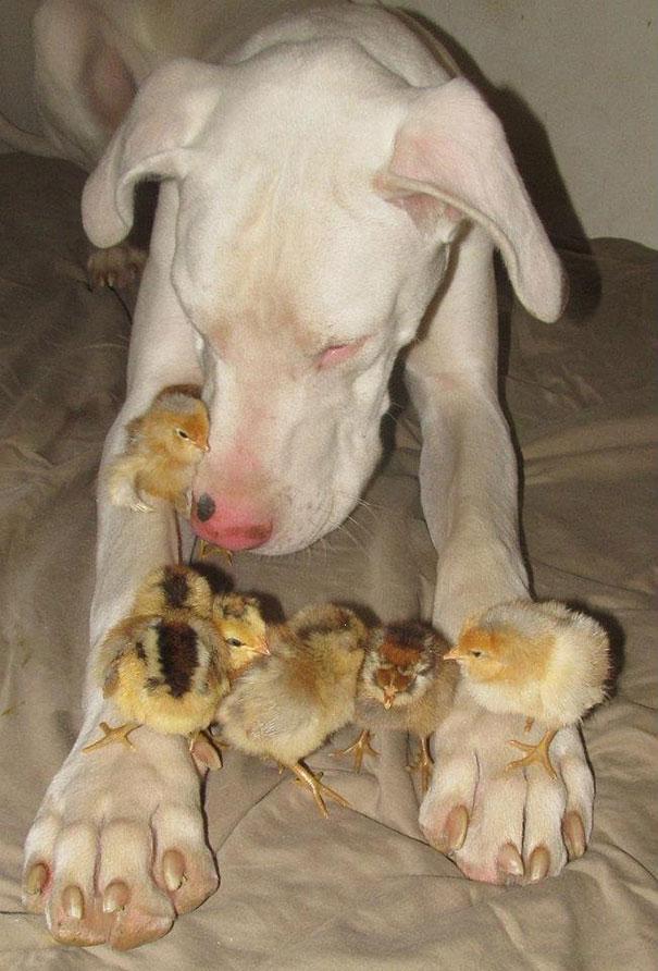 prietenii intre animale1