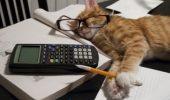 EXPERIMENT! Vrei să afli dacă animalul tău de companie știe să numere? Te învățăm ce trebuie să faci!