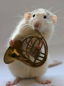 Imagini SENZAȚIONALE. Doi hamsteri se pricep de minune să cânte la diverse instrumente!