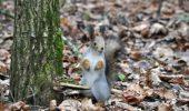 Fotograful era sa lesine cand a vazut cum si-a pregatit aceasta veverita pranzul!