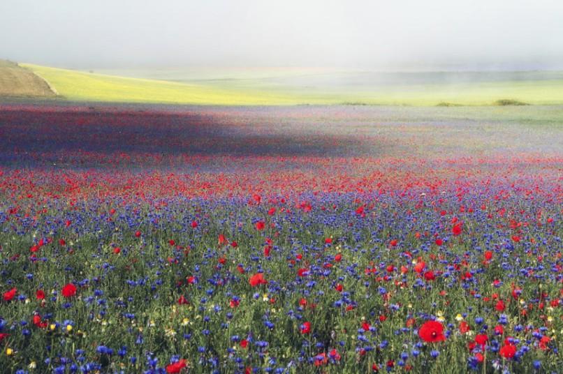 wildflower2_2820118k