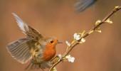 wildlifefirst_2820124k