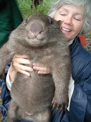 wombat_2819611k