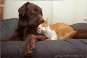 PRIETENIE ADEVĂRATĂ. Un câine și un pisoi sunt de nedespărțit. GALERIE FOTO