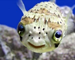 10 animale FERICITE care au un râs MOLIPSITOR! Atenție, te vei BINEDISPUNE!