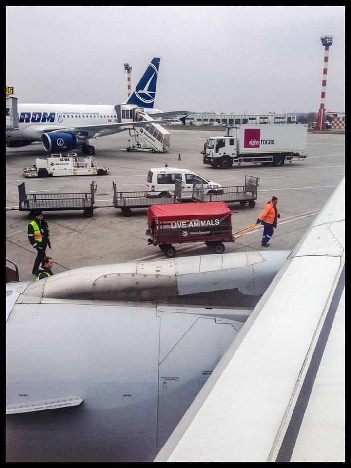 Aici urcam in avion... Si vedeam pentru ultima data Romania.