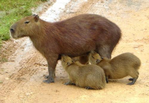 DEZASTRU ÎN COLUMBIA. Animalele sunt CHINUITE din cauza secetei VIDEO