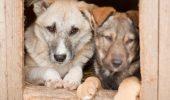 Câinii sunt singurele animale care răspund la numele care li s-a dat
