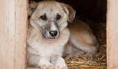Lupica_stray dog Romania