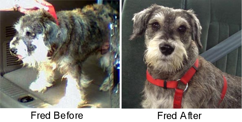 FredBeforeAfter