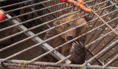 Fostul presedinte al Ucrainei facea bisnita cu pui de urs? Autoritatile sunt ingrozite de ce au gasit la casa lui de vacanta