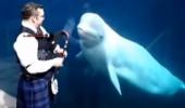 balene muzica cimpoi