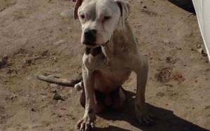 EMOȚIONANT. Un câine cu HANDICAP a fost salvat de la MOARTE după ce fusese ABANDONAT pe stradă