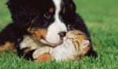 O pisică nu vrea nici în ruptul capului să SOCIALIZEZE cu doi câini extrem de curioși. Felina își păstrează calmul și nu răspunde gesturilor de PRIETENIE. VIDEO