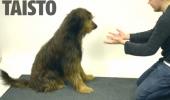 Un ILUZIONIST ascunde mâncarea câinilor! Patrupedele privesc numărul cu ULUIRE! VIDEO