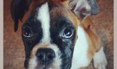 VIDEO EMOȚIONANT. Un câine care a rămas fără două picioare ALEARGĂ pe PLAJĂ!