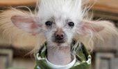 """S-a născut o nouă stea! Un câine dansează mai pasional ca Mihai Petre de la """"Dansez…""""!"""