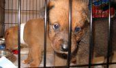 PREMIERĂ. Două persoane au fost condamnate la închisoare pentru trafic cu câini de rasă