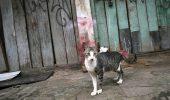 Pisica gestanta pierduta! Mai exista sansa sa se intoarca?