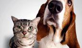 Tu spui ce animal deții, iar noi îți spunem cine ești!