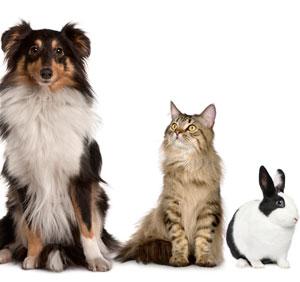 cat dog bunny