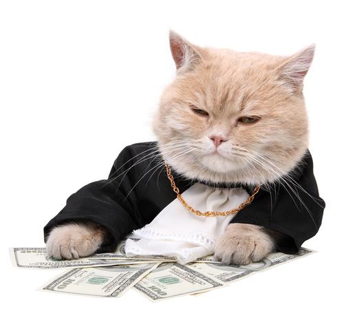 Hoaţa hoaţelor! Pisica fura bani din portofelul stăpânei! Şi ține cu dinții de ei