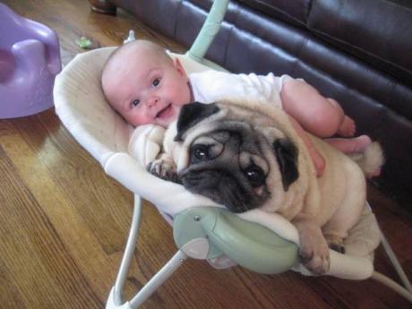 Uimitor! Cât de puternică este legătura dintre câini şi oameni? Un video adorabil