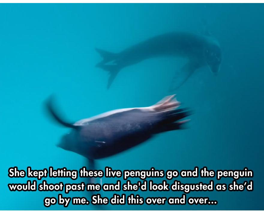cool-face-off-predator-seal-camera-dead-penguin