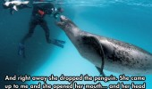 cool-face-off-predator-seal-camera-giant