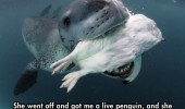 cool-face-off-predator-seal-camera-penguin