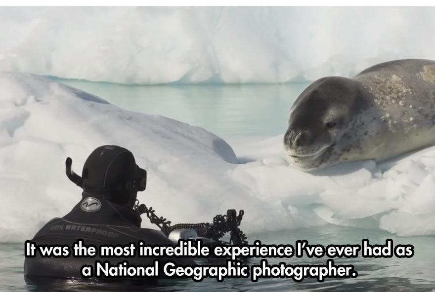 cool-face-off-predator-seal-camera-photographer