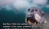 cool-face-off-predator-seal-camera-water