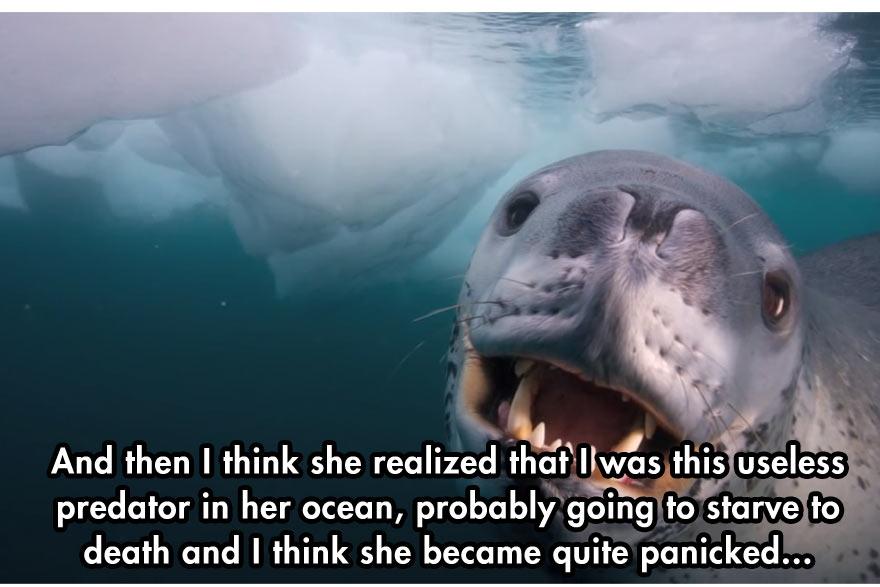 cool-face-off-predator-seal-camera-water