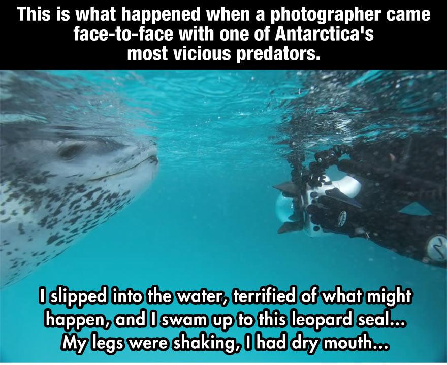 1.Am intrat in apa rece, terifiat de ceea ce s-ar putea intampla şi am inotat spre Leopardul de mare. Picioarele imi tremurau si aveam gura uscata...