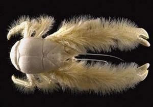 Nu sunt EXTRATEREȘTRI. SPECTACOLUL celor mai CIUDATE creaturi oceanice!